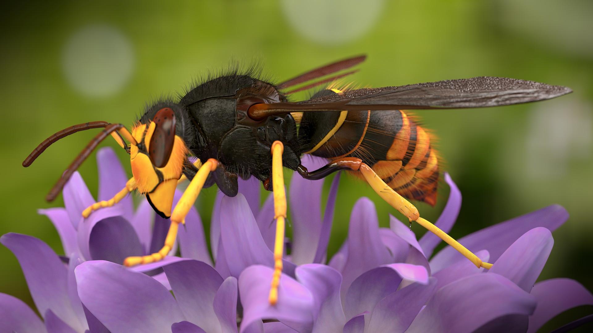 Japanese hornet